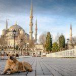 Hukum Islam Bawa Anjing Masuk Menginjak Karpet Mesjid