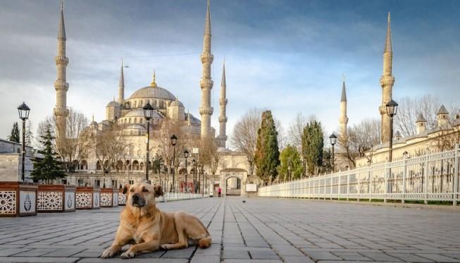 Karpet Masjid Berkualitas di 15 Negara Dunia